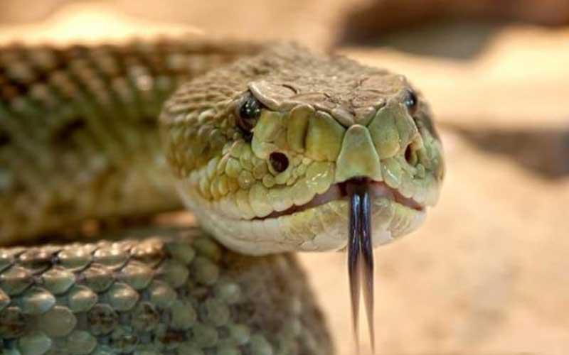 serpents animaux dangereux - topofthetop